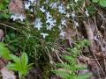 Spring-Wildflowers-3