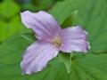 Spring-Wildflowers-4