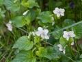 Spring-Wildflowers-5