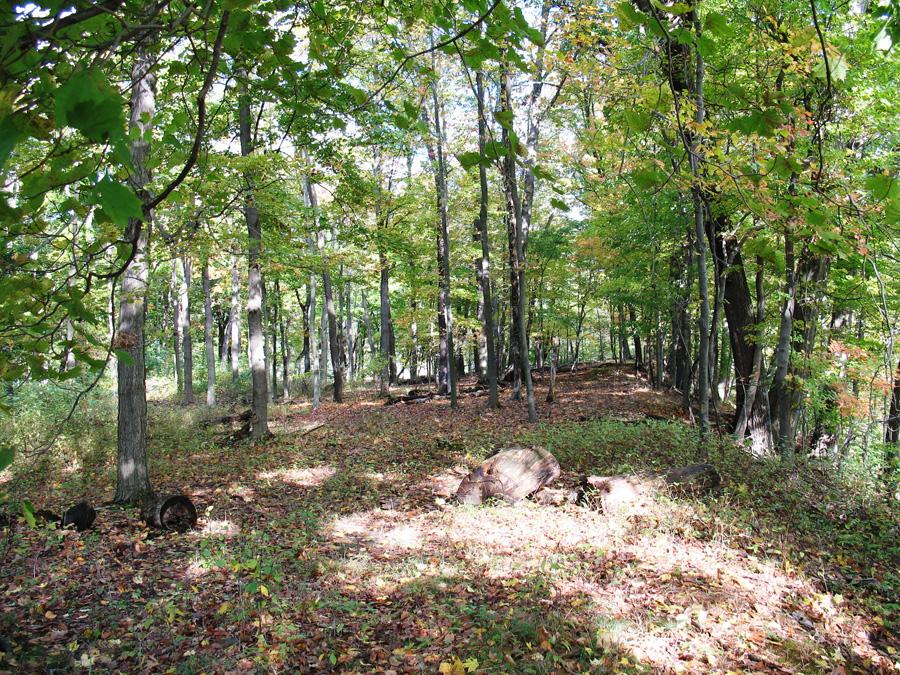 Plateau-Woods