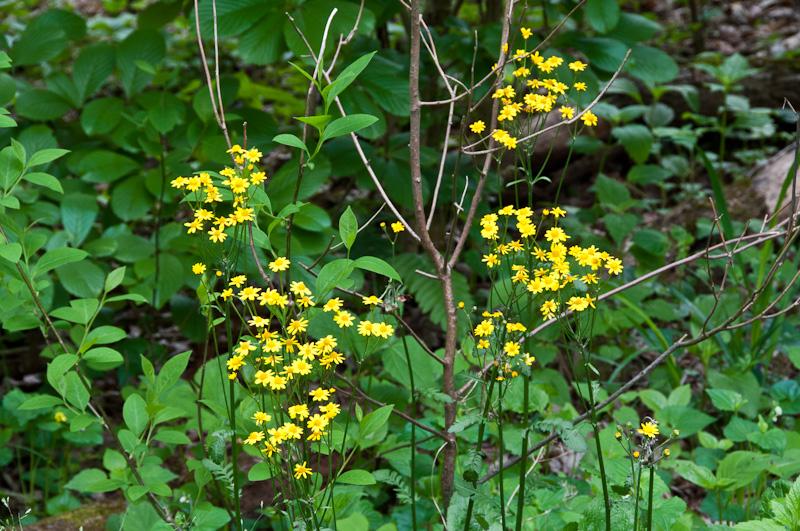 Spring-Wildflowers-1