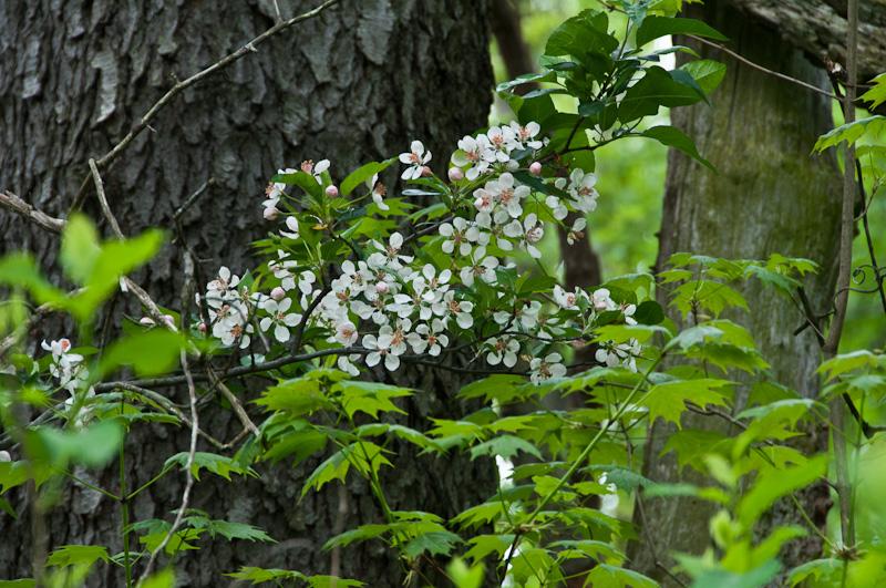 Spring-Wildflowers-6