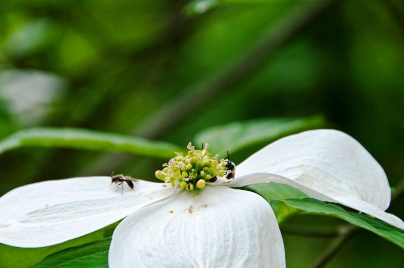 Spring-Wildflowers-7