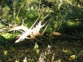 Artful-Stump