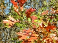 Fall-Leaves-2