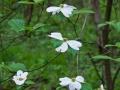 Spring-Wildflowers-8