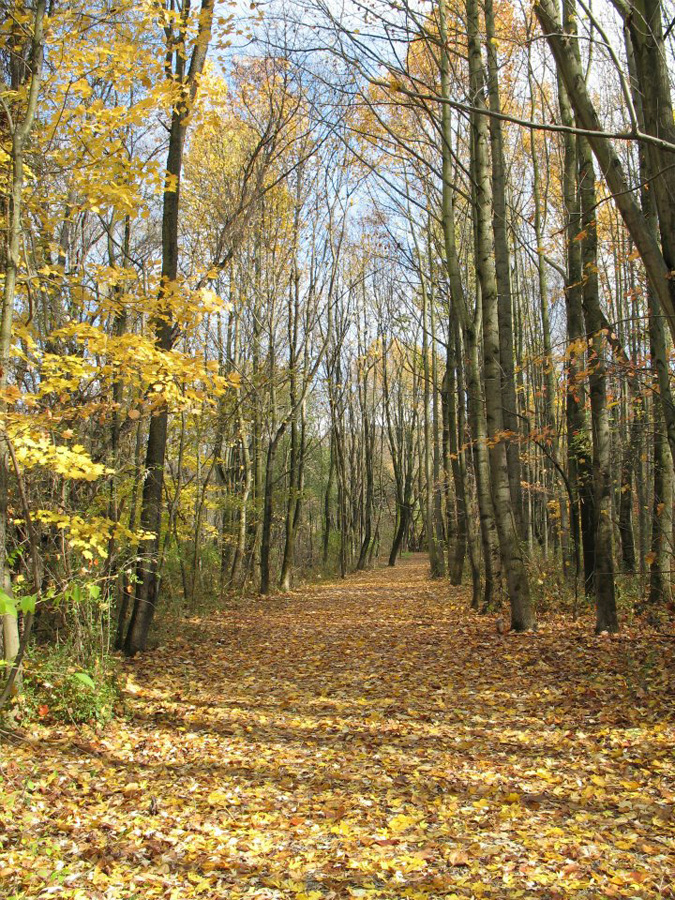 Fall-Path