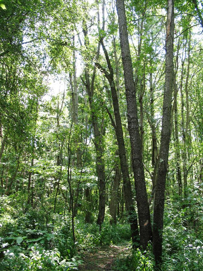 Woods-Path-2