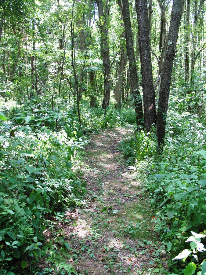 Woods-Path-3